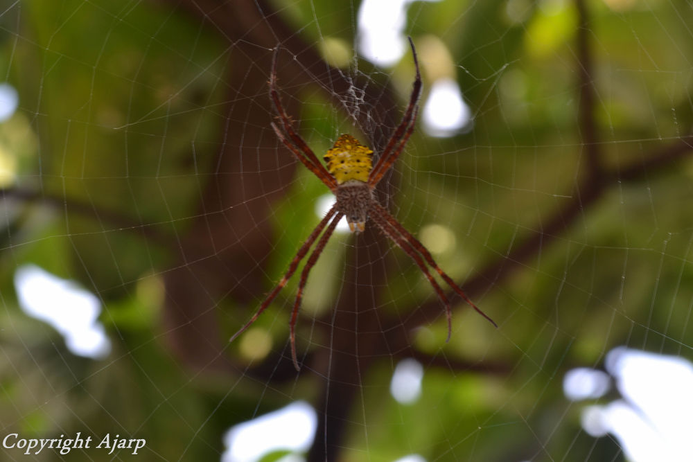 spider.jpg by Praja