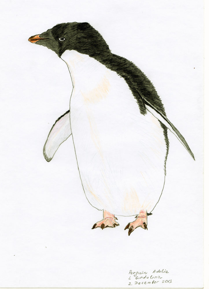 Penguin Adelie. A4. Available for sale. by LudmilaGindulina