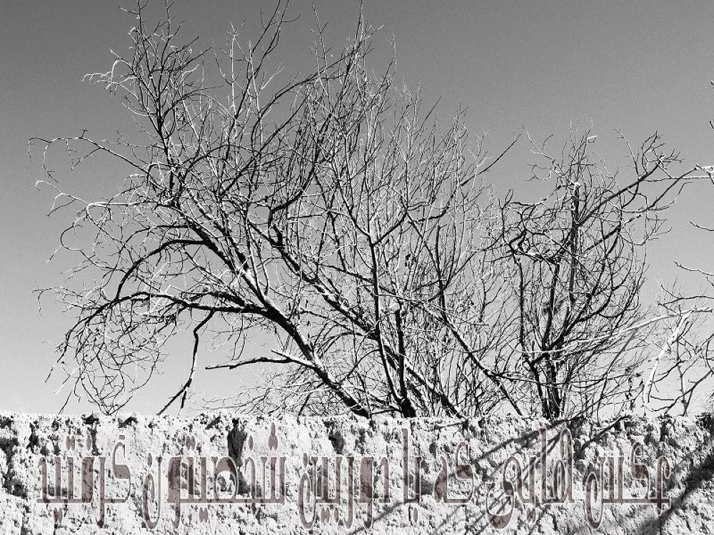 DSCN2469e by Ali Khorshidi