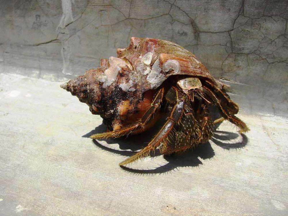 Sea-Shells.jpg by roymonoj027