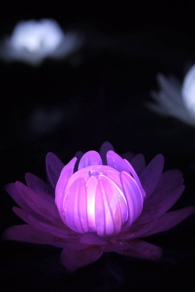 Nymphaea by Natura vid