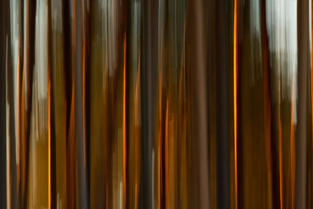 Pines by Mykhaylo Bogomaz