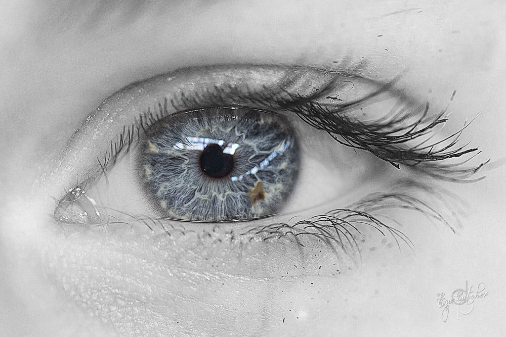 Julias_Eye_EyeCatcher_Season1_Classic-.jpg by danieldornhofer