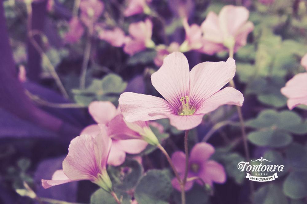 Flowers by Fontoura Art Fotographic