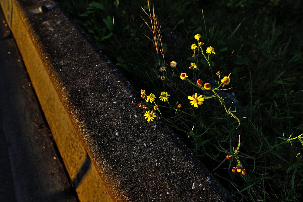 Photo in Nature #sprockhövel #haus kemna #kunst