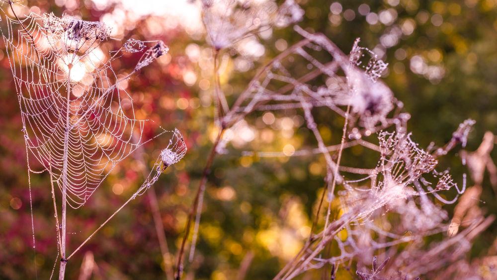 Colorfull web by RenatasKripas