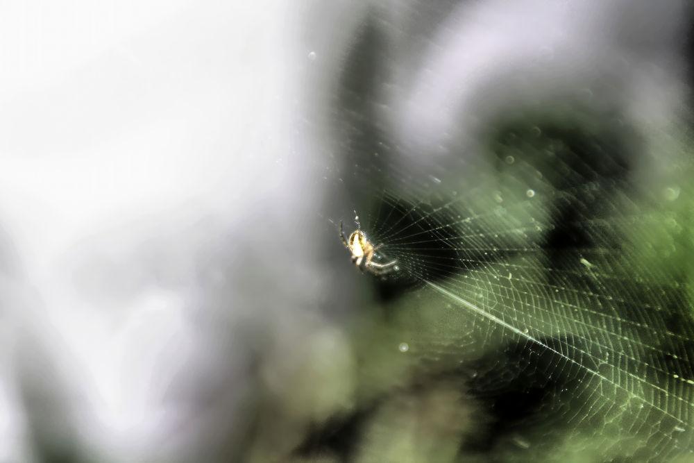 Web by Joaquim Gaspar