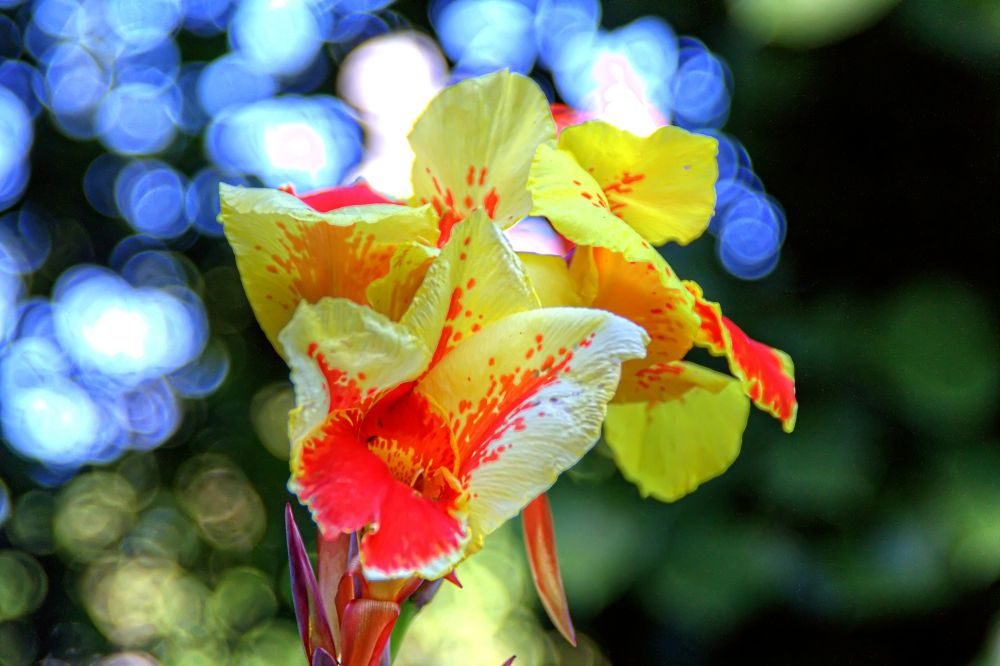 Photo in Random #portugal #lisbon #flower #bokeh