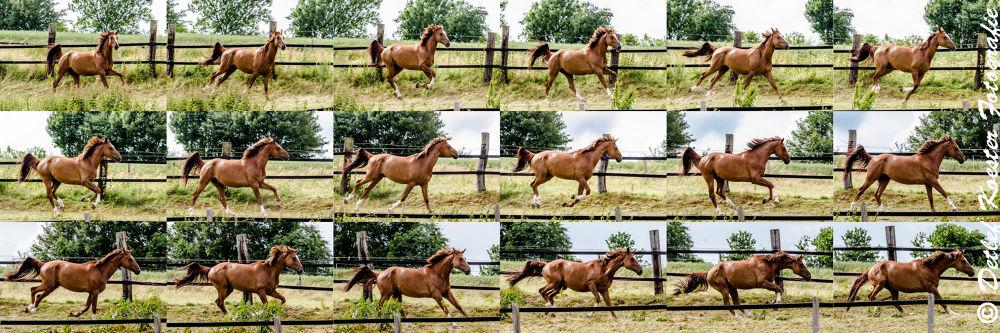 Photo in Animal #horse #galloping #pferd #galopp #deutschland #witten #nrw #germany