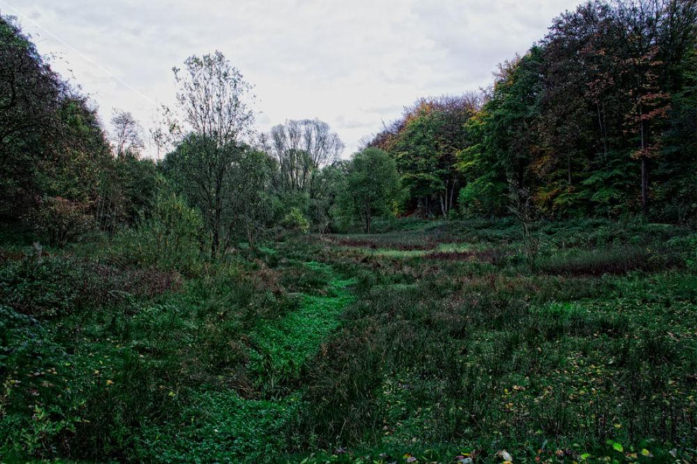 Green Autumn by detlefkoester