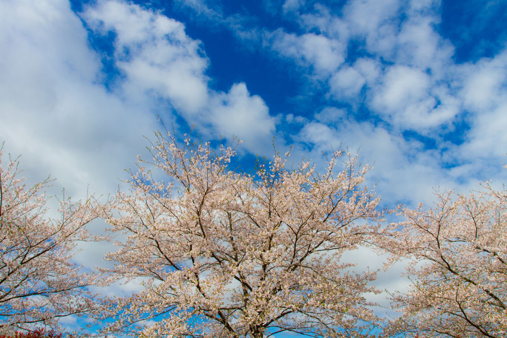 IMG_8033.jpg by MasaruMizuko