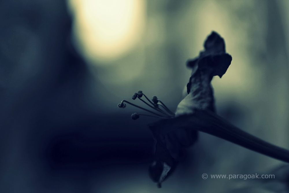 Image04 by Parag Oak