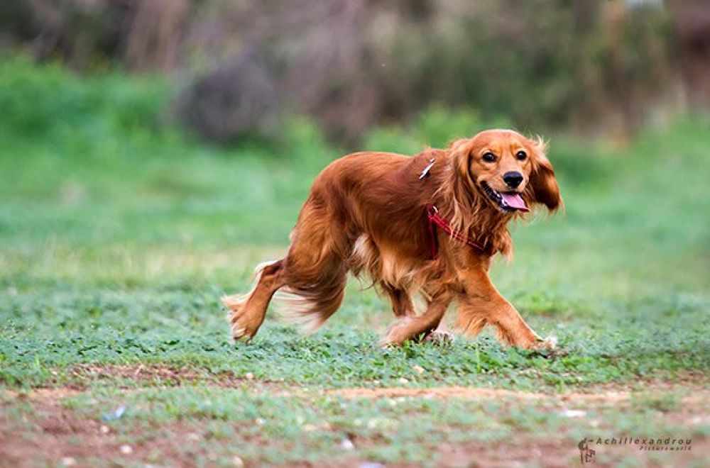 Dog 10.jpg by Picturesensation