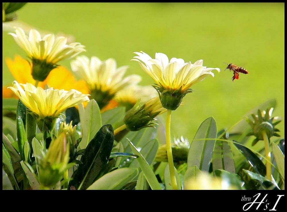 Photo in Nature #nature #flowers #bee #spring