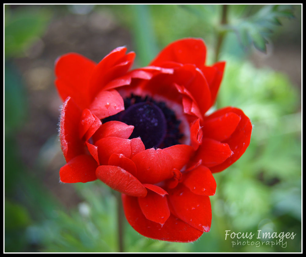 red flower  by grahambrown18