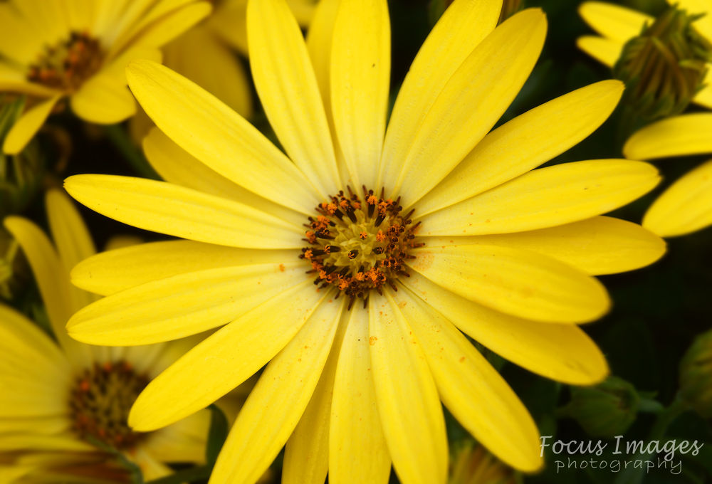 yellow flower by grahambrown18