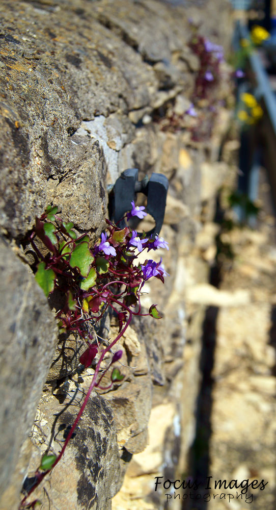wall flower take two  by grahambrown18