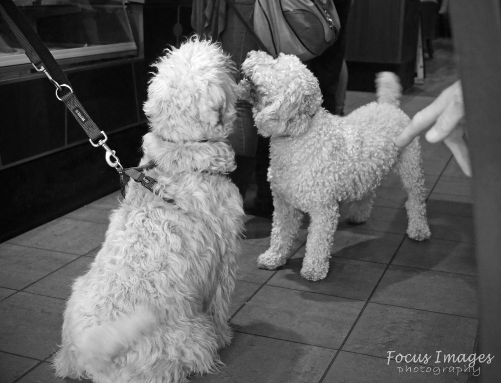 dogs by grahambrown18