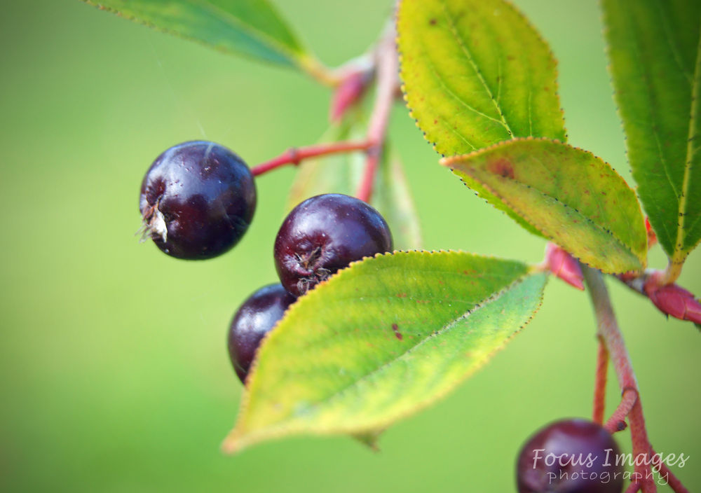 berrys by grahambrown18