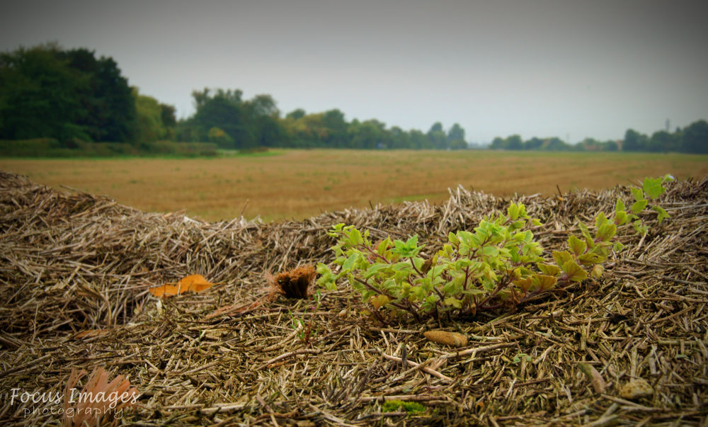 field by grahambrown18