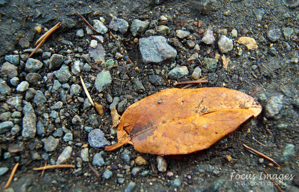 leaf by grahambrown18