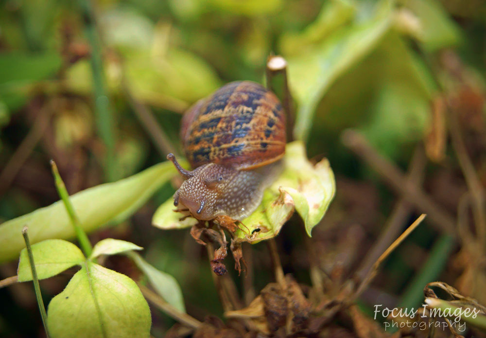 snail  by grahambrown18