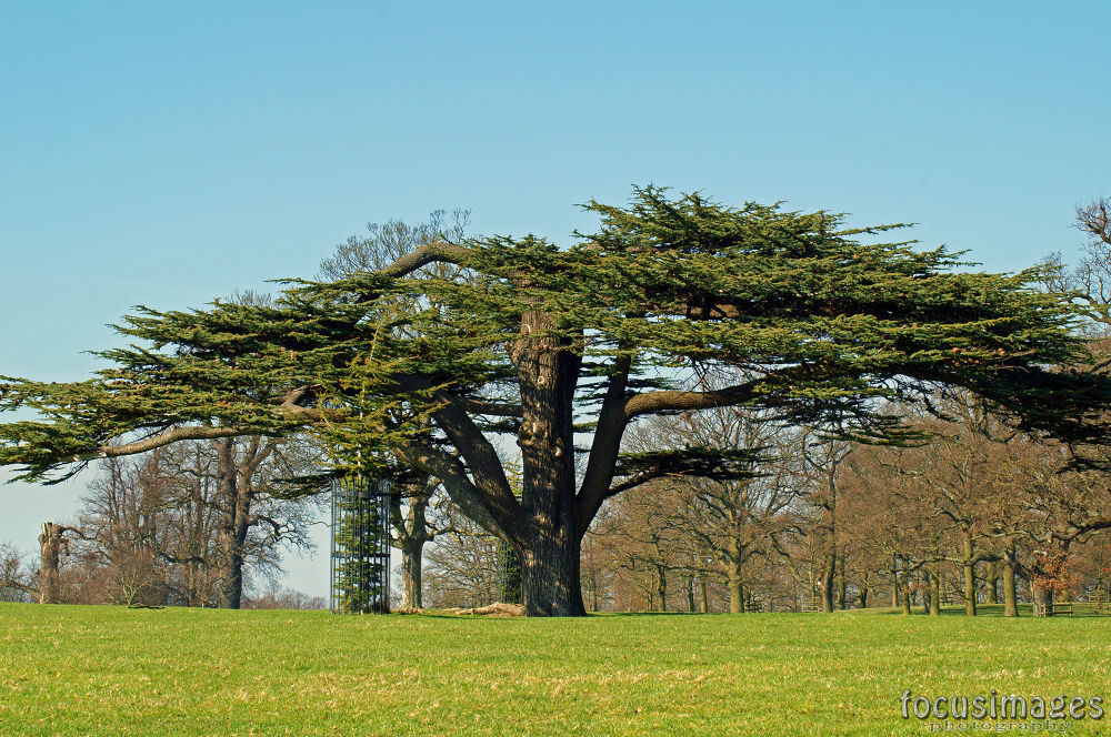 tree shape by grahambrown18