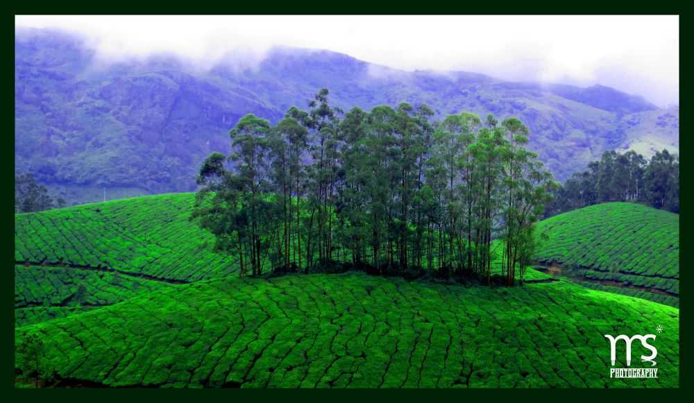 TREE 2.jpg by Manoj Sheth