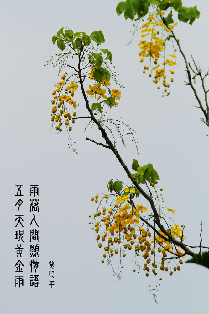 1020623-IMG_9261-01.jpg by stonesang