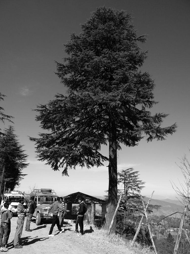 devdar-tree-sheetla.jpg by prashantbhandari90