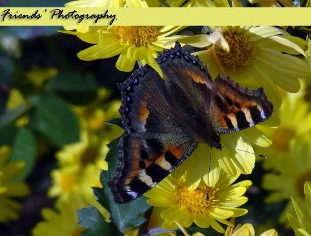 butterfly  by prashantbhandari90