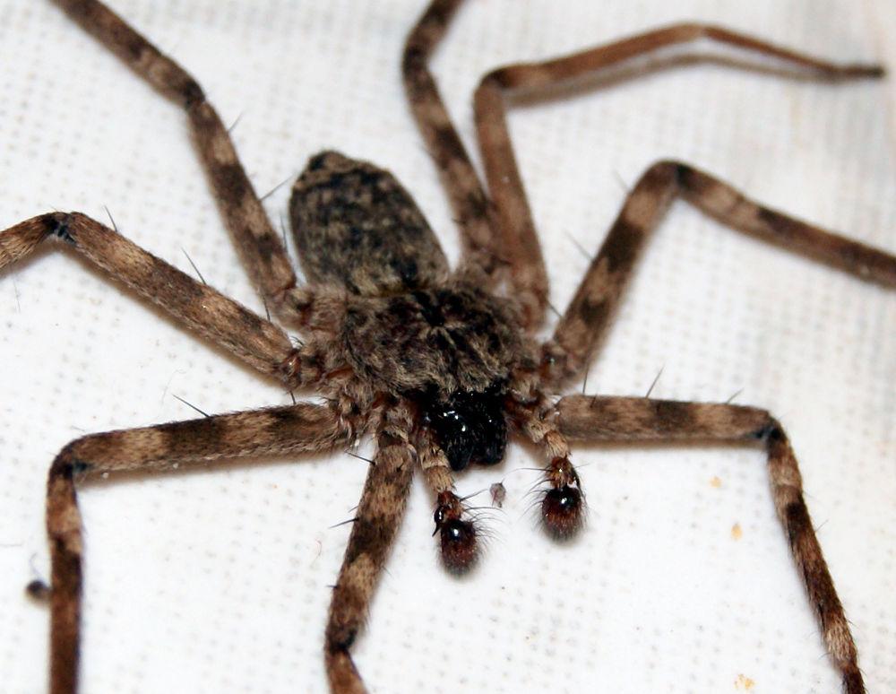 spider by prashantbhandari90