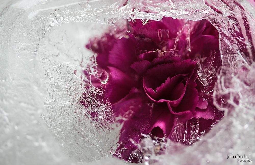 frozen flower by JBPhotography