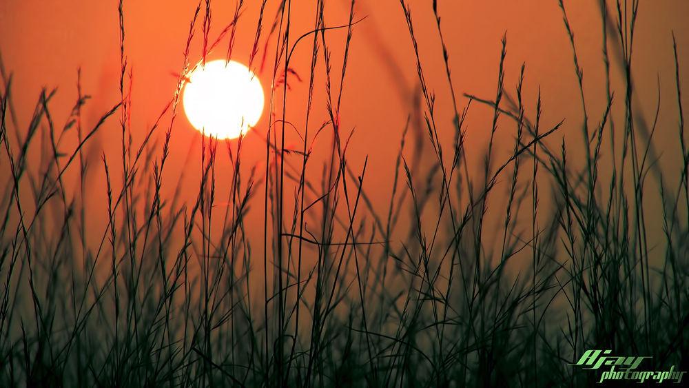 Morning in village.jpg by Ajay Shahu