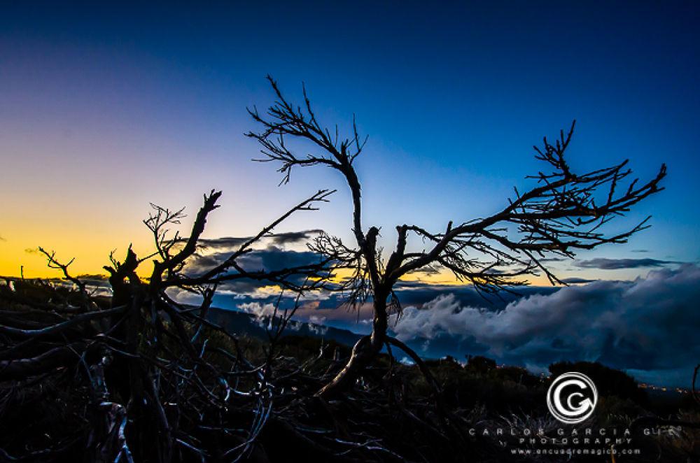 Dry bush sunset. Copyright Carlos García Gil photography by carlosgarciatenerife