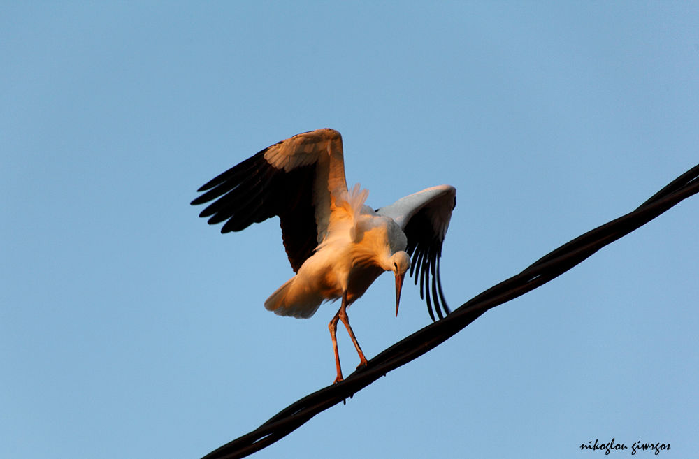 (The Suspended Step of the Stork) by giorgos nik