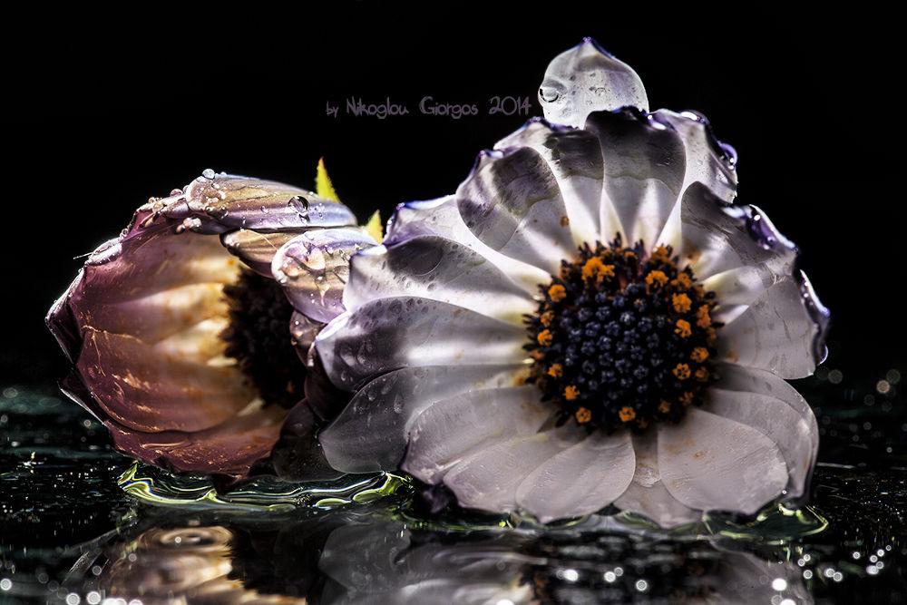 IMG_5788 by giorgos nik