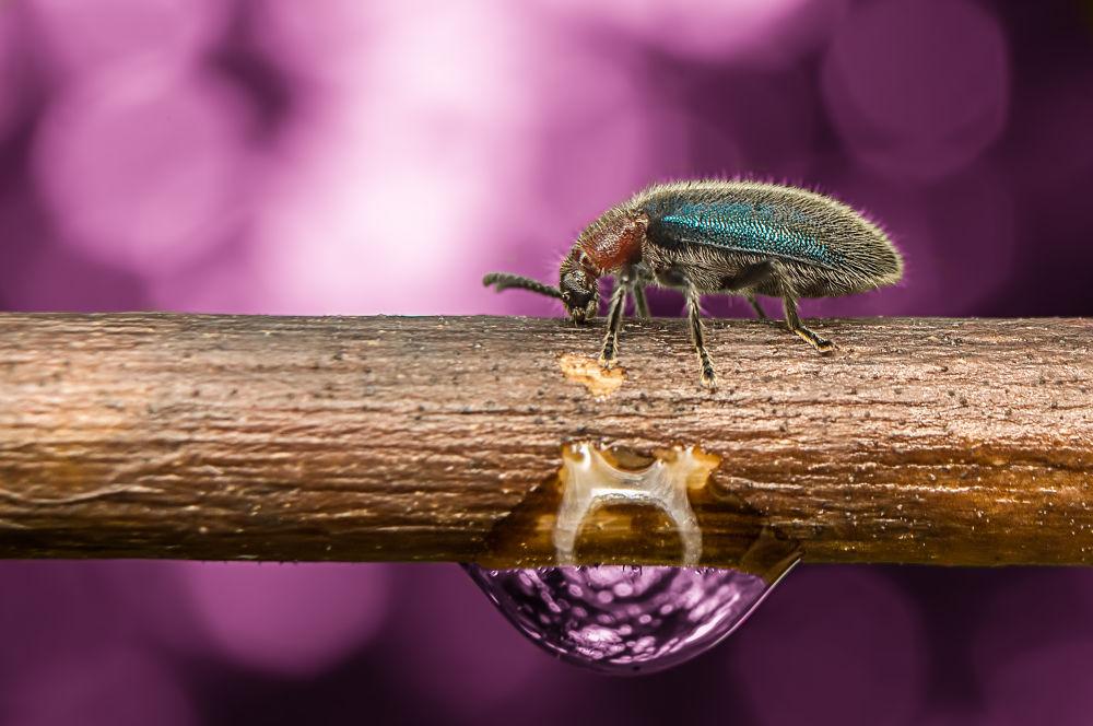 Photo in Macro #beetle #macro #insect #droplet