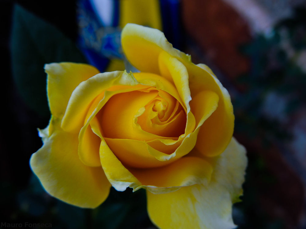 Flor by maurofonseca