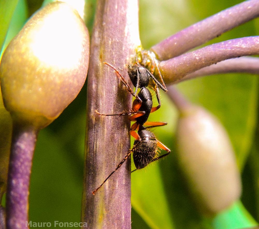 Photo in Animal #mauro fonseca #ant #formiga #brasil #brazil #p510
