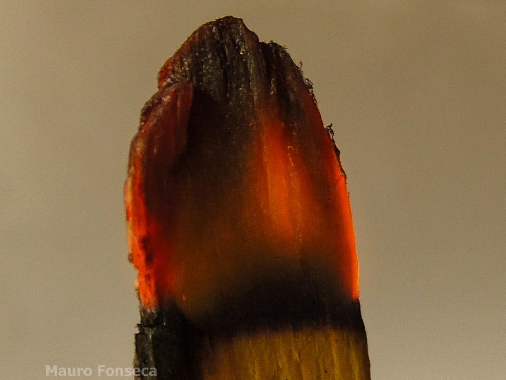 Fire by maurofonseca