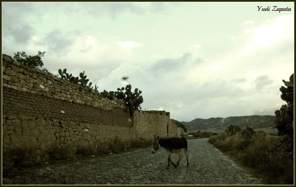 donkey in the way.jpg by yuyizapata