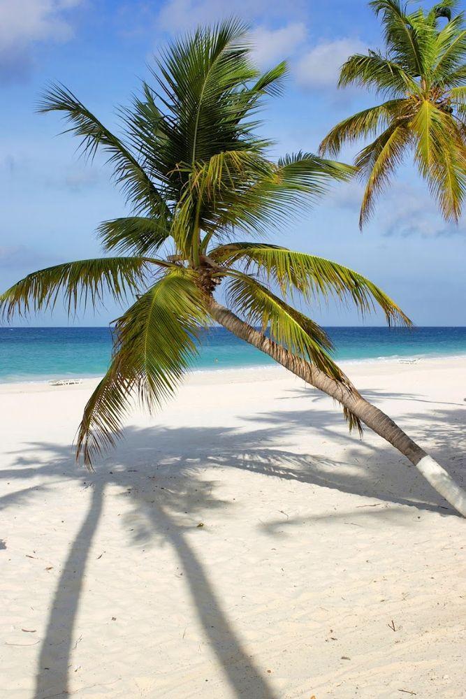 Aruba.jpeg by rvgphotography