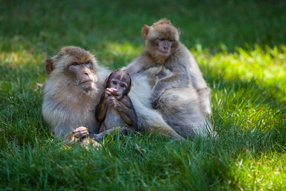 Family Life by berndwilleke