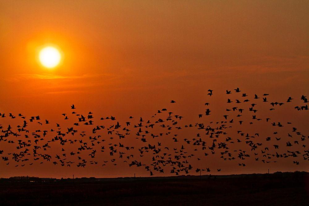 Sunset by See  Sonnenuntergeang-mit-Ringelgaensen by berndwilleke