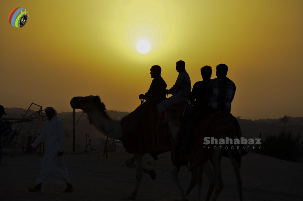 Camel Riding.jpg by Shahabaz Pleasant