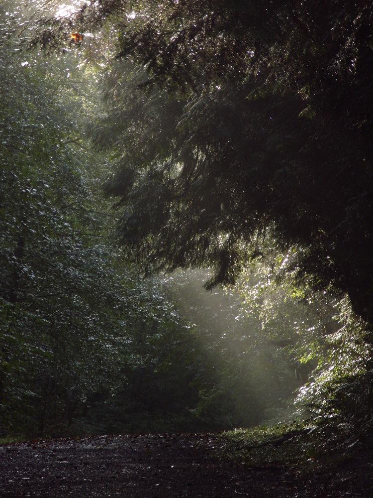 fall 2011 044 by maynardjeffers