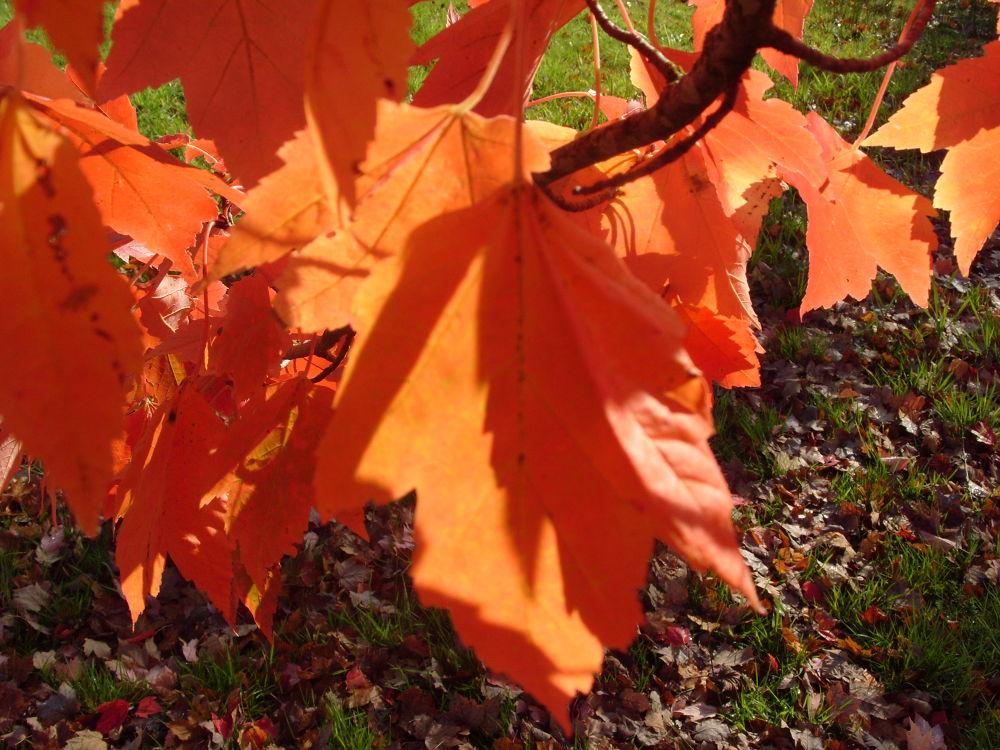 fall 2011 448 by maynardjeffers