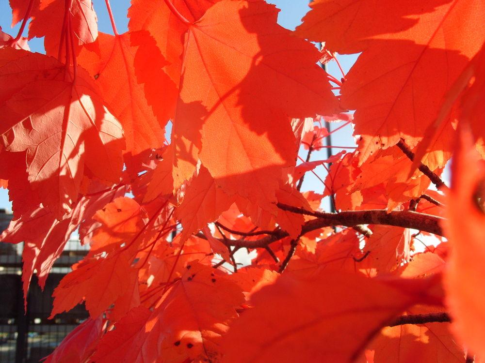 fall 2011 560 by maynardjeffers