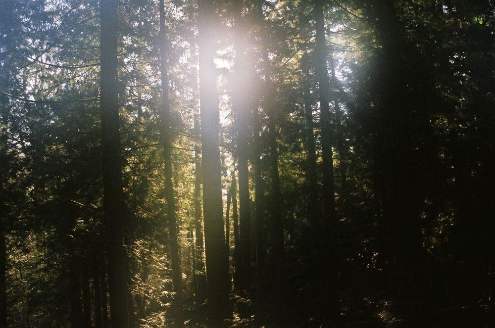 00190019 light & trees by maynardjeffers